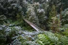 Winter Ferns, Victoria